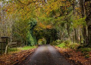 Оренда авто Ома, Північнa Ірландія